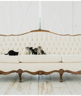 Strictly Weddings Feature Inspiration – Fur Babies!